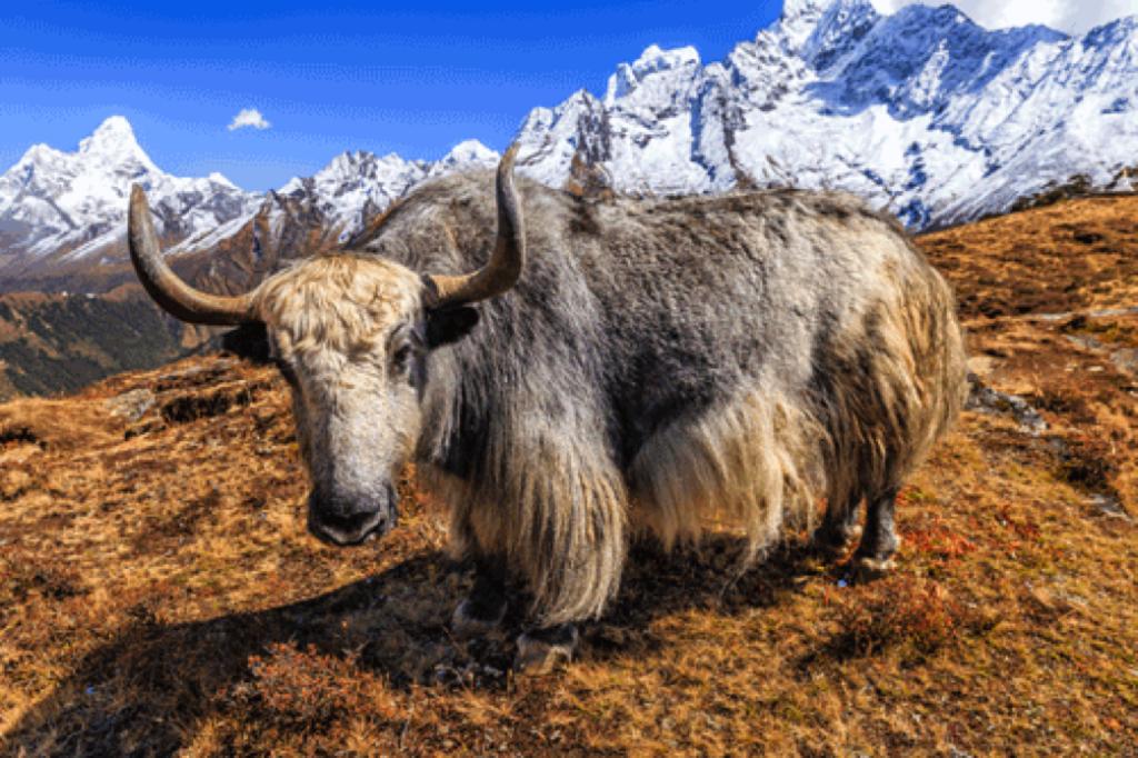 yak laine bergère de France